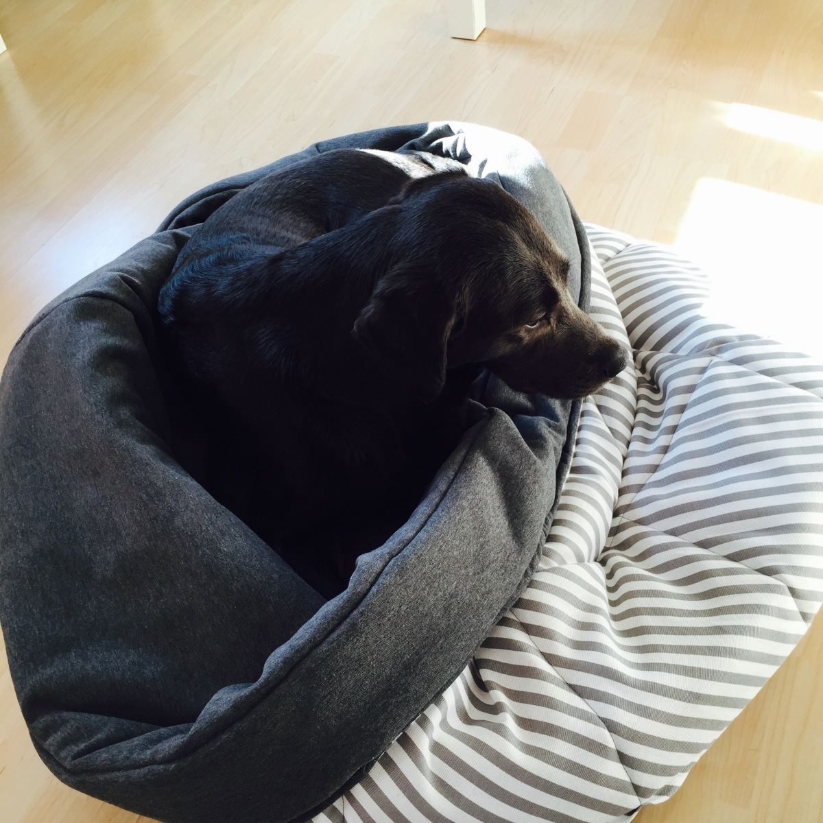 Nähanleitung: Hunde-Schlafsack
